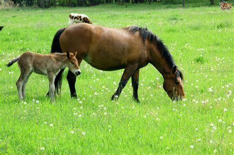grazing horses dangers dredging improve pets4homes