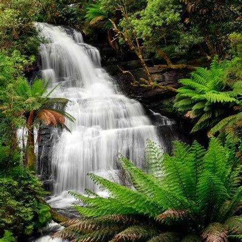 rainforest waterfall  great otway national park