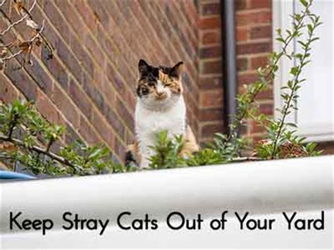 how to keep cats out of your yard keep stray cats out of your yard lil moo creations