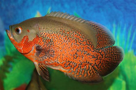 types  fishes  world