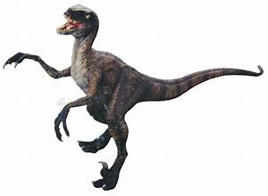 Jurassic Park Dinosaur Velociraptor 1/5 Vinyl Model Kit | eBay  Velociraptor