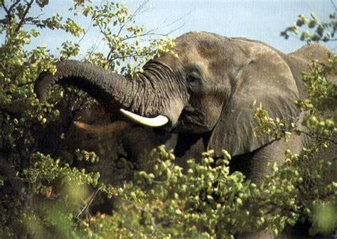 elephant cuisine elephant