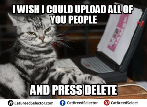 Annoyed Cat Meme - irritated meme pictures to pin on pinterest pinsdaddy