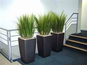 Plantes En Pot Pour Terrasse : plante pot exterieur plante en pot exterieur plantes rtb ~ Dailycaller-alerts.com Idées de Décoration