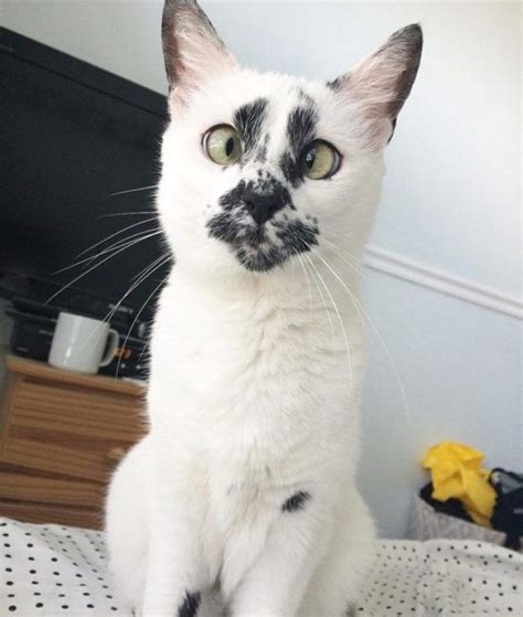 Stray Cat With Unique Face Begs Her Rescuer Keep