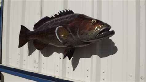grouper mount fish