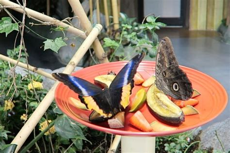 audubon butterfly garden and insectarium things to do in new orleans butterfly garden insectarium
