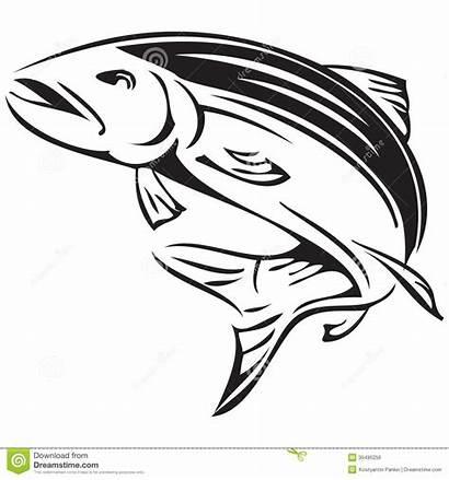 Salmon Symbol Vector Atlantic Alaska King Fish