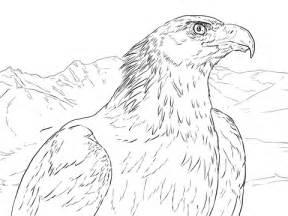 golden eagle portrait coloring page supercoloringcom