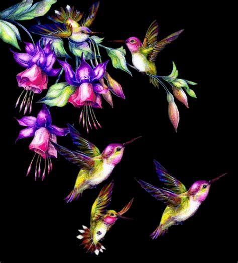 3d Animated Gif Wallpapers - 3d animated gif glitter graphics birds animated photos
