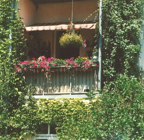 Kletterpflanzen Balkon Sichtschutz by Garten Kletterpflanzen Sorgen F 252 R Sichtschutz Auf Dem