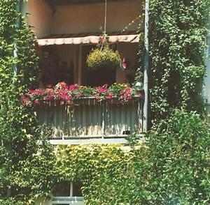 Kletterpflanzen Für Balkon : garten kletterpflanzen sorgen f r sichtschutz auf dem balkon welt ~ Buech-reservation.com Haus und Dekorationen