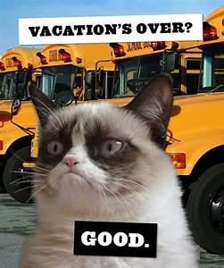 Grumpy cat back to school | Back To School Pets ...