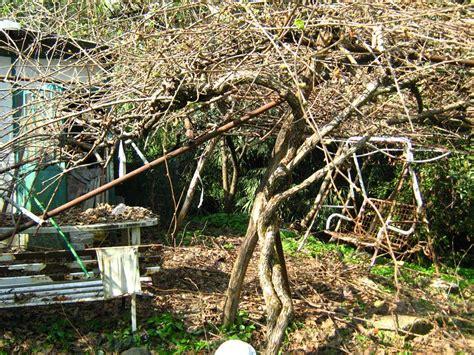 giardino marzo di nuovo in giardino a scoprire i danni da neve