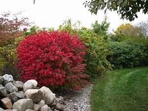 Arbuste Feuillage Persistant Croissance Rapide : id e de jardin cr er une haie fleurie et parfum e ~ Premium-room.com Idées de Décoration