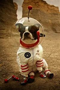 1000+ ideas about Space Suit Costume on Pinterest   Space ...
