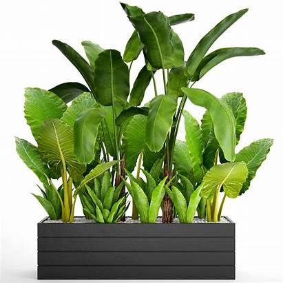 Tropical Plants 3d Flowerpot Plant Models Pot