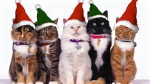 santa cat of 3 bring on the santa cats