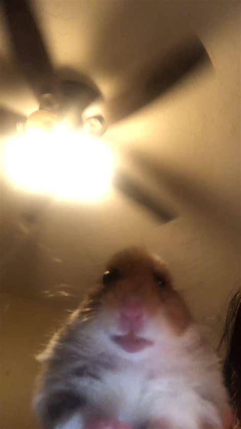 hamster wallpaper  replayinq    zedge
