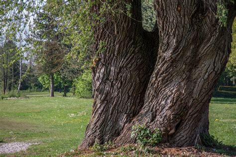 Mensch Und Natur  Der Innere Und Der äussere Garten
