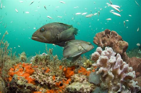 climate change pushing  fish  cooler waters