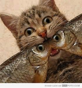 cat and fish cat and fish kitten smitten