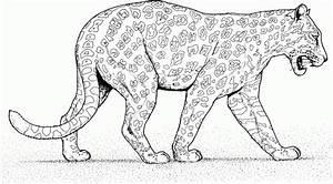 Dessin Jaguar Facile : on a para colorir e imprimir muito f cil colorir e pintar ~ Maxctalentgroup.com Avis de Voitures