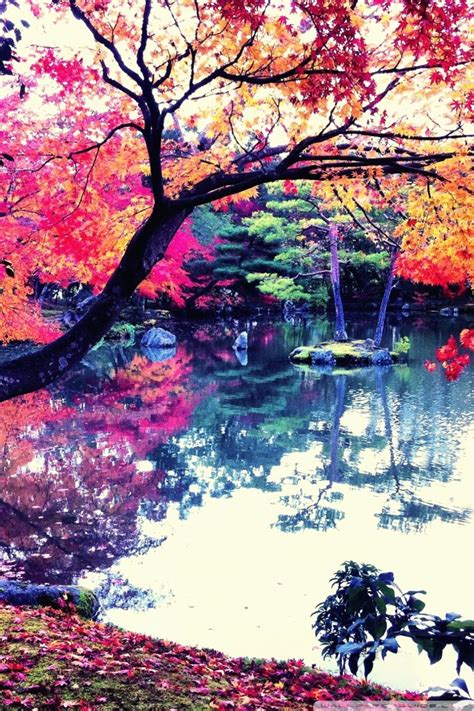 fall  japan ultra hd desktop background wallpaper