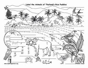 Taiga Coloring Pages Coloring Pages