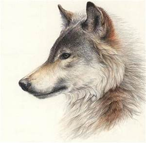 wolf side view - Google Search | Wolf | Pinterest | Wolf ...
