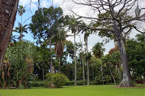 foster botanical garden foster botanical garden