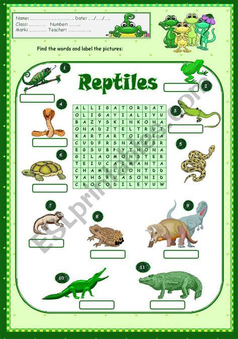 reptiles esl worksheet  vanda