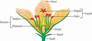 Draw The Diagram Of A Flower And Label The Four Whorls