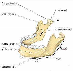 Skull And Facial Bones