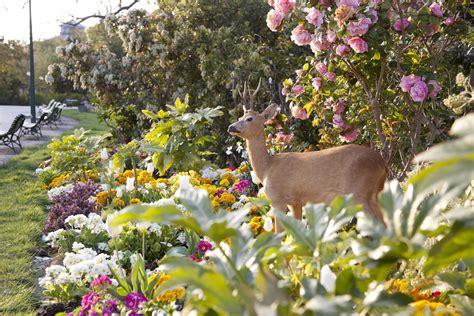 deer resistant bulbs deer resistant spring blooming bulbs
