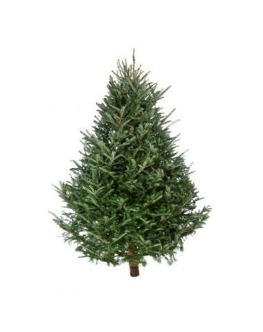 real christmas tree 6ft 163 7 99 home bargains hotukdeals