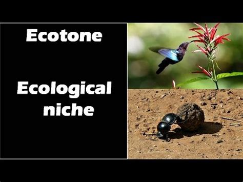 14 Ecotone And Ecological Niche (ecosystem