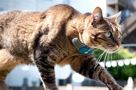 cat gps tracker  cat rf tracker  microchip tech