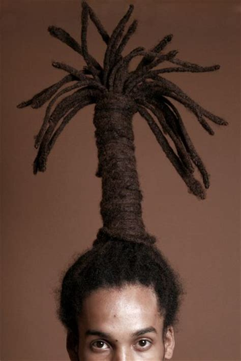 hair  palm trees discussing palm trees worldwide