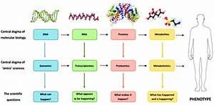The Relationship Between The Central Dogma Of Molecular Biology And The