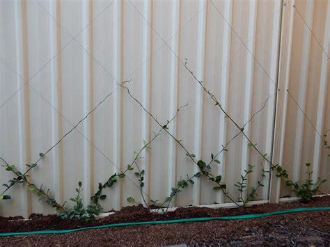 climbers  dress  colorbond fence workshop