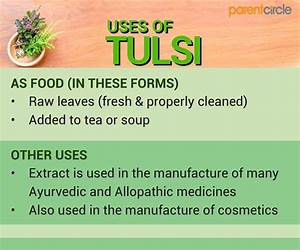 Holy Basil  Tulsi  Leaves Uses  Health Benefits  U0026 Side Effects