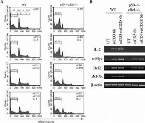 Impaired Cell Cycle Entry And Survival After Tcr