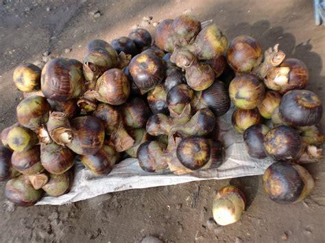 buah siwalan  buah asli indonesia