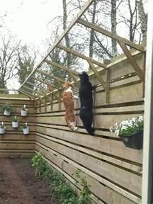 cat proof fence best 25 cat fence ideas on cat enclosure