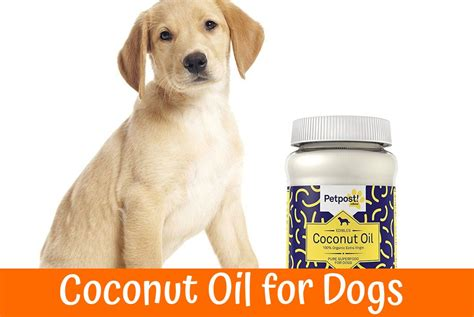 coconut oil  dogs  healthy product   coat