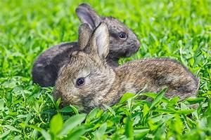 Tiere Im Garten Begraben : haustiere im garten halten so geht s ~ Lizthompson.info Haus und Dekorationen