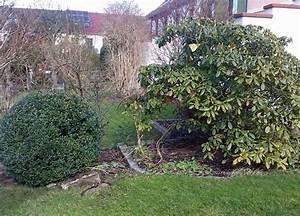 Pflanzen Für Den Garten : immergr ne pflanzen f r den garten im winter der wohnsinn ~ Frokenaadalensverden.com Haus und Dekorationen