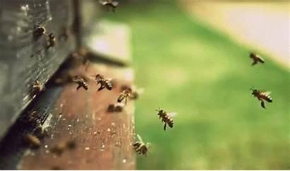 Bees Honey Bee Hive Fly Honeycomb Nectar