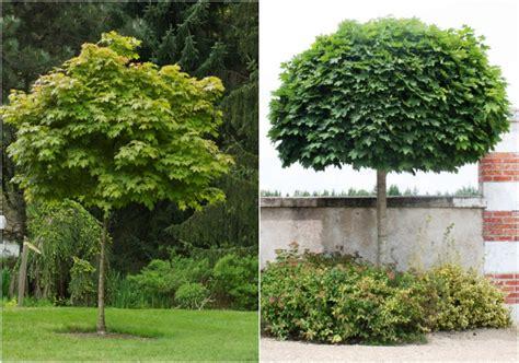 Baeume Im Garten Zierde Und Schattenspender by Herausragende B 228 Ume F 252 R Den Kleinen Garten Gartenb 228 Ume 50